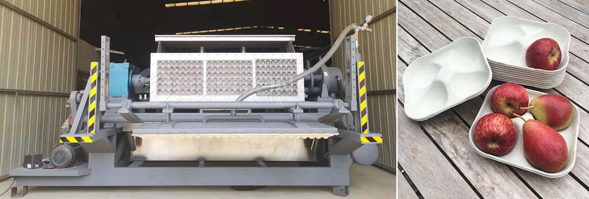 Beston Apple Tray Making Machine